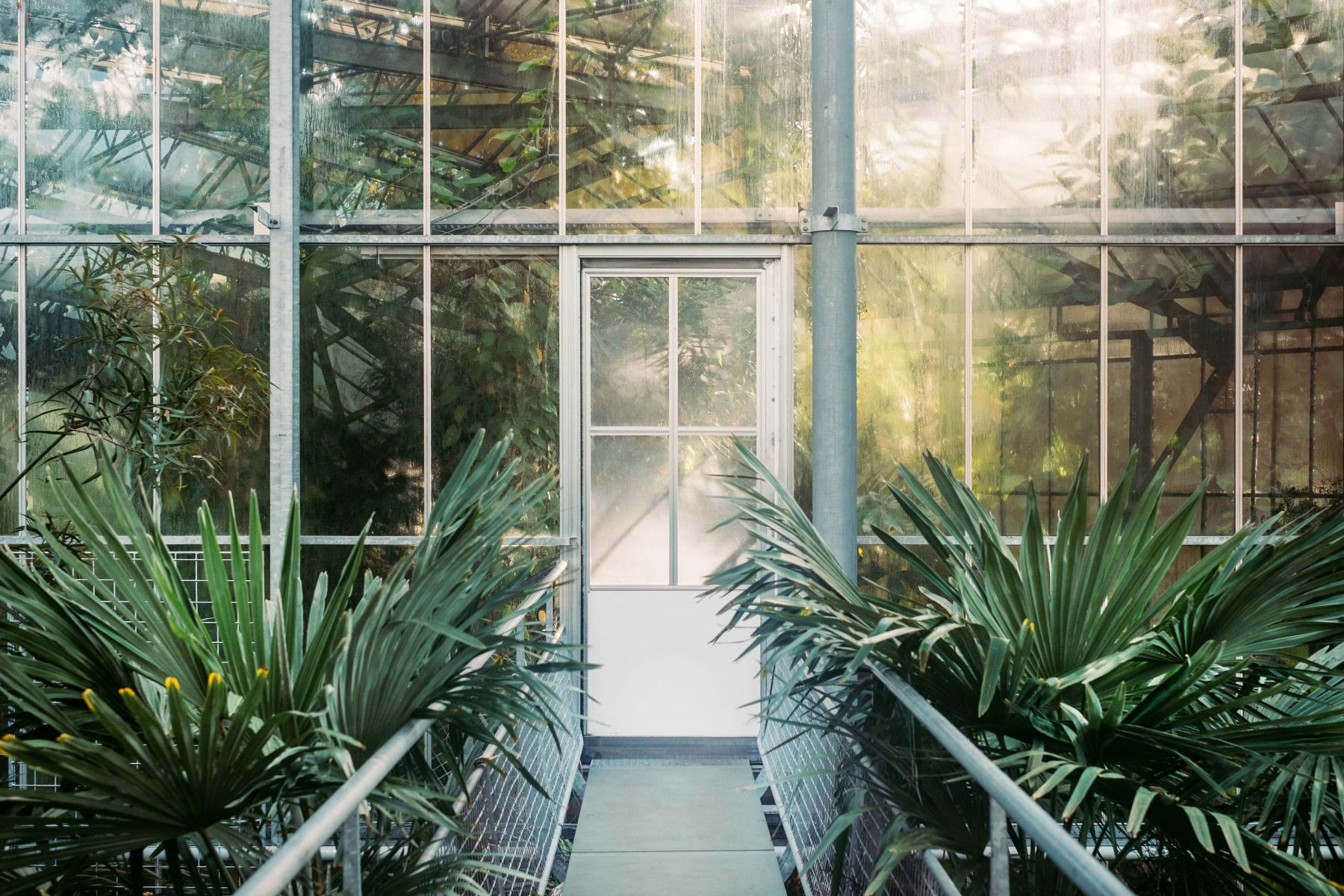 photo of a green conservatory with glass walls and door